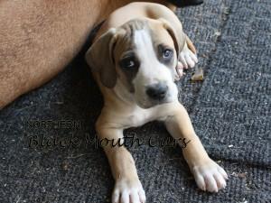 PuppyTitle3-300x225