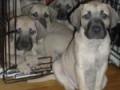 PuppiesGroup-150x150