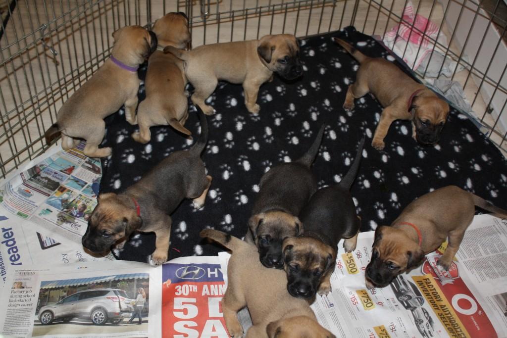 PuppyUpload1-1024x683