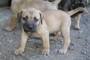 PuppyUpload13-300x200