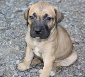 PuppyUpload7-300x270