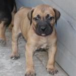 PuppyUpload9-150x150