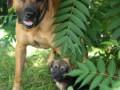 PuppyUpload111-150x150