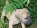 PuppyUpload12-150x150