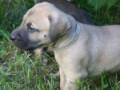 PuppyUpload14-150x150