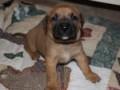 PuppyUpload4-150x150