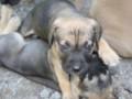 PuppyUpload6-150x150