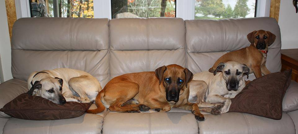 DogsonCouch